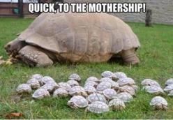 Awwww so many TURTLES!!!!: Baby Tortoise, Babies, Animals, Funny, Turtles, Tortoises