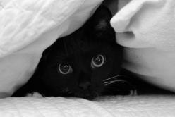 Black cats are so cute - Its official!: Animals, Black Kitty, Chat Noir, Black Cats, Pet, Adorable, Peek A Boo, Blackcat