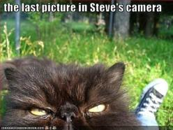 Bye Bye Steve: Funny Animals, Picture, Cats, Poor Steve, Funnies, Humor, Things, Cat Lady