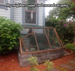 Cat patio without appearing to have gone 100% full crazy cat lady: Cats, Cat Patio, Ideas, Funny Pictures, Pets, Crazy Cat, Cat Lady, Animal