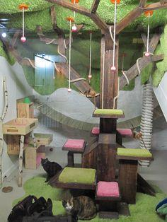 Cat room. This would be awesome. To be then connected to a catio, and a small snuggly corner with bookshelves where the humans and cats could have some proper snuggly time...: Cats, Awesome Cat, Crazy Cat, Cat Tree, Cat Stuff, Cat House, Catio Ideas, Cat