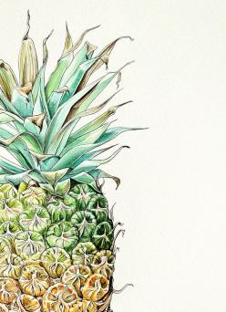 daily imprint: art: Pineapples, Artist Pip, Boydell Illustrations, Inspiration, Pip Boydell, Drawing