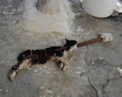 Does an animal abuser live in your neighborhood?    Communities have good reason to be concerned about the whereabouts of animal abusers. In story after heartbreaking story, abusers repeat their violent crimes against helpless animals, and often go on to