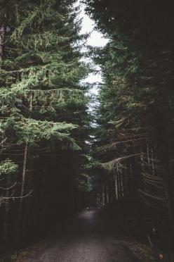 elenamorelli:  { dreaming of great adventures }: Forests, Adventure, Dark Forest, Post, Wood, Nature, Trees