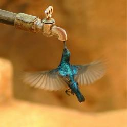 exquisite....: Animals, Humming Birds, Nature, Things, Beautiful Birds, Photography, Hummingbirds