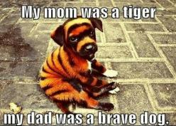 funny animal quote and pic...              PLEASE FOLLOW ME FOR MORE PUPPY NONSENSE :D: Animals, Dogs, Pet, Puppys, Tigers, Funny Animal, Tiger Puppy, Tiger Dog