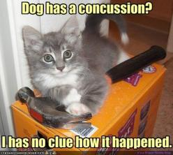 funny cat pictures with captions 9   funny cats: Funny Animals, Dogs, Funny Cats, Funny Stuff, Humor, Funnies, Kitty