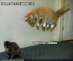 funny cats with captions - Google Search: Funny Animals, Funny Cat Pictures, Funny Cats, Funny Pictures, Funny Stuff, Funnies, Humor, Kitty, Gravity