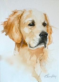 Golden Retriever 8x10 print by KrisTrembleyGallery on Etsy, $20.00: Kristrembley, Art Watercolor, Golden Retrievers, Dog Art, Retriever Watercolor, Golden Retriever
