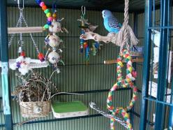 Great budgie cage set-ups--lots of ideas and advice: Parakeet Cage, Bird Toys, Budgie Cage, Pet Bird Cage, Birdcare Budgies, Budgies Parakeet, Birds Budgies