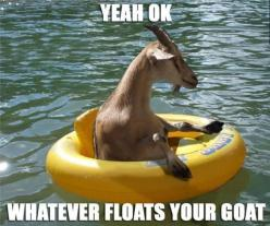 Hahaha I'm so going to start saying this!!!!!: Goats, Giggle, Animals, Funny Stuff, Funnies, Humor, Things