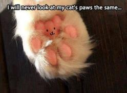 How did I never notice the tiny bear trapped in my cats' paws????: Cats, Cat Paws, Animals, Teddybear, Teddy Bears, Kitty Paw, Funny, Catpaw