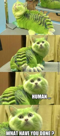 Human, what have you done?: Funny Animals, Kitty Cats, Funny Things, Funny Cats, Pet, Poor Kitty, Funnies, Humor