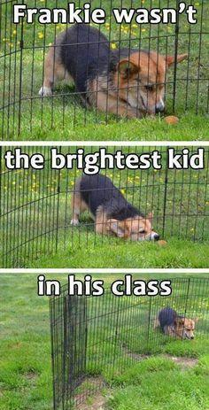 Humor dogs, funny pics, humour quotes, funny jokes, jokes funny, hilarious funny, hilarious animal pictures …For the best humour and hilarious jokes visit www.bestfunnyjokes4u.com/lol-funny-cat-pic/: Cats, Funny Animals, Kitten, I M Fur, Dogs, Funny Stuff