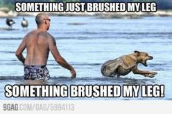 I've maybe overreacted like this once or twice: Animals, Giggle, Dogs, Funny Stuff, Funnies, Lake, Humor, Things