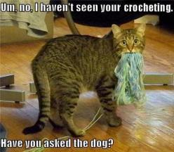 I am certain the dog did it: Cats, Animals, Funny Cat, Knitting, Funny Stuff, Funnies, Funny Animal, Dog, Kitty