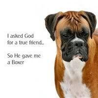 I asked God for a true friend, so He gave me a Boxer: Boxers Boxers Boxers, Boxers Dogs, Boxers Gotta, Boxerlover Ilovemyboxers, Boxer Love, Boxers Dog Stuff, Boxerdoglife Boxerlover, Animals Boxers