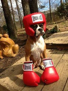 """""""I box because I thought that's what I was supposed to do but what if I'm not a fighter at all? What if I'm a painter?""""   23 Dogs Who Don't Even Know Who They Are Anymore"""