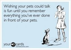 I never had a pet, apart from a fish -  fun! - Check out the blog - http:trendingfn.blogspot.com - Get 20% off every order at Karmaloop and PLNDR using rep code SHANE20: Cats Humor, Pet Ecards, Dog Ecards, Funny Cat Quotes, Someecards Dog, Dog Humor Ecard