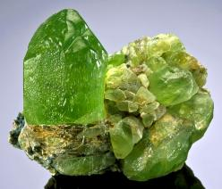 Incredible specimen of Forsterite var Peridot! . The crystals were of equal size and gemminess and it has taken a long time to find another. This crystal measures 4.4 cm or  nearly 2 inches in size!   The large Peridot sits atop a matrix of smaller Perido