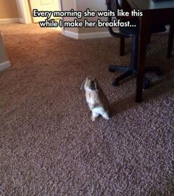 Just Waiting For Breakfast: Awww, Animals, Funny Pictures, Breakfast, Pet, Funnypictures, Funnies, Bunnies