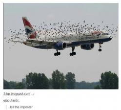 Kill the imposter | tumblr • funny • haha • ducks • plane • lol • text posts: Flying Creatures, Birds Flying, Clean Funny, I M Laughing, Tumblr Funny, Funny Stuff, Planes Gonna, So Funny, British Airways