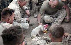 kindness: Animals, Soldiers, Dogs, Sweet, Hero, Puppys, Military