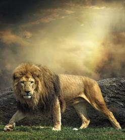 King Of The Jungle !: Big Cat, Sayings, Lion, Control, Danger, Quotes, Thought, Animal