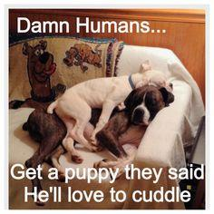 Lol- Boxer Dogs: Funny Animals, Adorable Animals, Boxers Dogs, Animals Friends, Pets, Boxer Dogs And, Puppys, Animals Furry Friends Cuddly, Boxers Puppies Things Sayings
