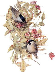 Marjolein Bastin (this is NOT a free printable, but I would love to have these images to use, so putting it here so I don't forget ~TA): Marjolien Bastin, Bastin Art, Birdhouse, Illustration, Album, Marjolein Bastin, Birds