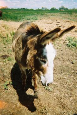 maybe i'm flirting, maybe i'm just looking at this dirt.: Coy Donkeys, Ânes 1 Photos, Best Friends, Cute Baby Animals, A Donkeys, Donkey Wild Animals