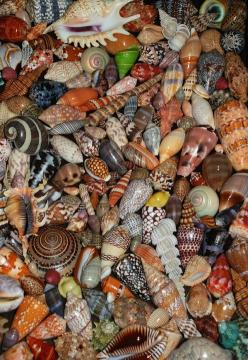 Nautical treasures... ✞ Art is the most intense mode of individualism that the world has known. ~Oscar Wilde✞: Beautiful Seashells, Sea Shells, Beach Seashells, Seashore, Sea Treasures, Beach Shells, Seashells Crap, Sea Glass