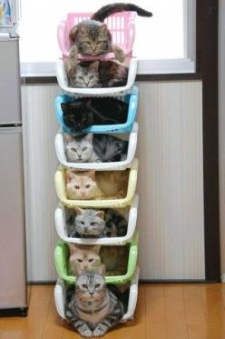 """No Pinterest board on organization would be complete without a pin showing """"How to Store and Organize Cats"""" ... these are great - more on website!  (We now return you to your regularly scheduled organization pins): Cats, Animals, Pet, Funny, Crazy"""
