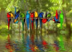 Reminds me of some of my friends...colorfully crazy, just like me: Animals, Nature, Parrots, Colorful, Colors, Beautiful Birds, Rainbow, Photo