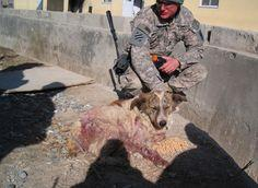Rocky was a stray in Afghantistan. Rocky's fierce loyalty saved countless lives in an active war zone. In return, he received safe passage to the United States, where he now lives comfortably with one of the soldiers he saved.: Heroic Stray, Dogs Insp