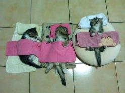 Slumber Party... Click the link--19 hilarious reasons that cats are better than dogs. Absolutely hysterical :o): Cats, Animals, Pet, Funny, Kittens, Day, Kitty