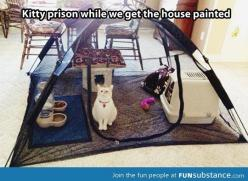 So funny: Cats, Animals, Good Ideas, Kitty Prison, Pet, Funny, Crazy Cat, House, Cat Lady