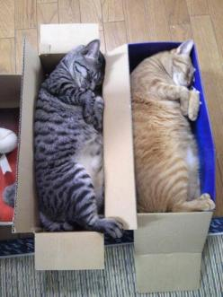 So I got some new shoes today by redonculous via reddit ~ Nap time :)  I think these cats would be more comfortable in a Dog Gone Smart bed from Master Pets http://shopmasterpets.com/collections/cats/products/dog-gone-smart-sherpa-fleece-cat-bed: Funny An