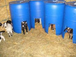 These would make great creep feeders, as well as safe place to get out from under bigger goats, and warmer sleeping in winter.: Warmer Sleeping, Pygmy Goat, Bigger Goats, Diy Goat Shelter, Creep Feeders, Goat House, Safe Place, Goats In Winter, Diy Goat F