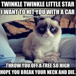 this is awesome: Cats, Animals, Grumpycat, Funny Stuff, Humor, Funnies, Grumpy Cat
