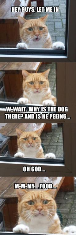 Thoughts Of A Cat.: Funny Animals, Kitty Cat, Funny Pictures, Funny Cats, Funny Stuff, Poor Kitty, Funnies, Dog