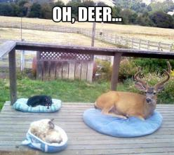 Unexpected guest // funny pictures - funny photos - funny images - funny pics - funny quotes - #lol #humor #funnypictures: Cats, Animals, Dogs, Bed, Pets, Funny Animal, Friend, Deer