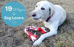 19 DIY Projects for Dog Lovers: Dogs, Diy'S, Tshirts, Pet, Dog Toys, T Shirts, Diy Projects
