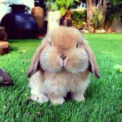 """ How many Easter Eggs can you put in your Mouth "" ???: Rabbit, Animals, Cuteness, Pet, Adorable, Box, Bunnies, Chubby Cheeks"