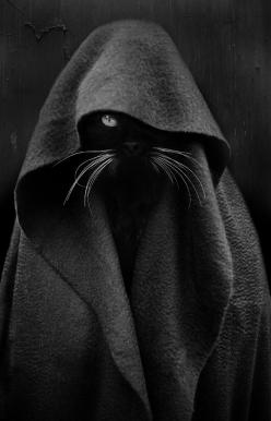 """Nevertheless, I will Master Jabba now.""   \><\  ""I wish I could write as mysterious as a cat."" --Edgar Allen Poe: Cats Photography, Black Cat Dark, Death Art Photography, Black Cat Creepy, Kitty Dark, Mysterious Photography, Creepy"