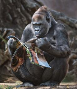 """Who Took The Centerfold?"" 