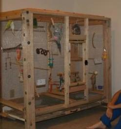 Advice on making indoor mini aviary - Talk Budgies Forums: Aviary Ideas, Parakeet Cage, Animals, Budgie Aviary, Finch Aviary, Aviary Outdoor, Aviary Indoor