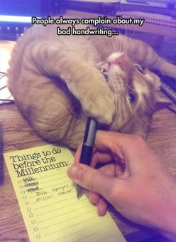Amusing Animals pictures of the hour – 8 pics: Crazy Cats, Animals, Bad Handwriting, Funny Stuff, Humor, Funnies, Funny Animal, Kitties, Cat Lady