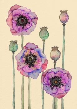 Another poppy water color.  I'm tempted to order prints of both of them and get them framed...: Watercolor Poppies, Colleen Parker, Wild Poppies, Watercolors, Illustration, Art, Watercolor Flower, Water Color, Painting