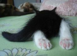 Awww...lol....sooo Cute!! ♥ - Click for More...: Kitty Cats, Animals, Kitty Feet, Kitty Kitty, Kittens, Feline, Kitties